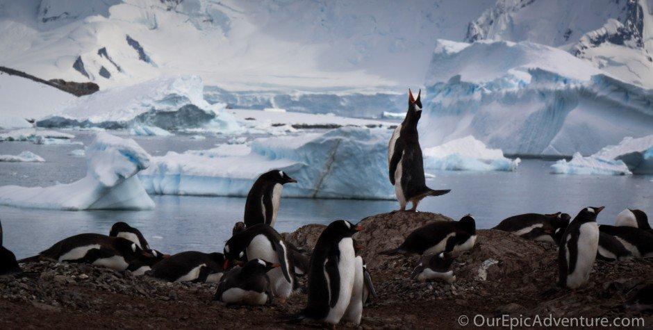 Antarctica: Huge, bleak, yet starkly impressive