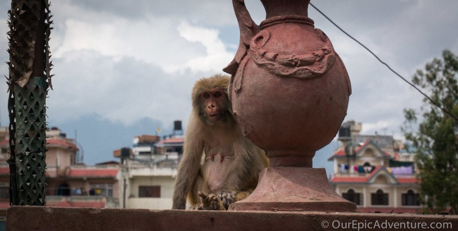 Pashupatinath's Temples and Monkeys